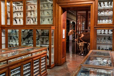 Museum of zoology and comparativa anatomy