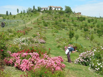 Modena through flowers, herbs, rose petals