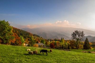 Barigazzo,  pecore e asinello, ph. Nacchio Brothers.jpg
