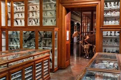 Museo di zoologia e anatomia comparata